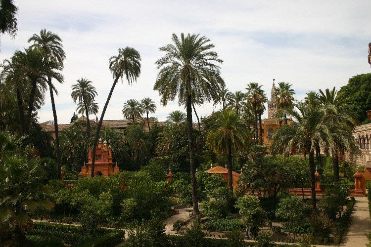 20040914018 - Sevilla: A Beautiful, Lush City Full of Fan Palms, Cafés and Historic Monuments