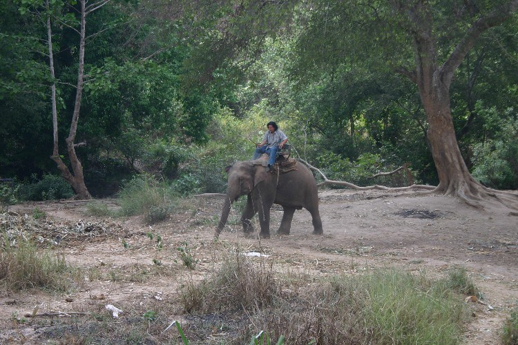 ww11 - A Songkran Day With Elephants and Mahouts