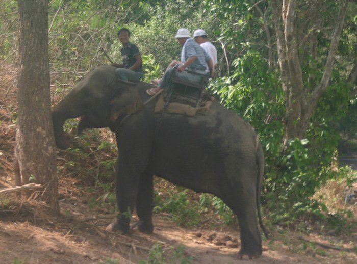 ww14 - A Songkran Day With Elephants and Mahouts