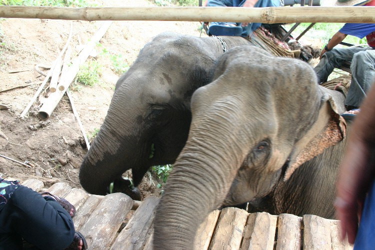 ww15 - A Songkran Day With Elephants and Mahouts