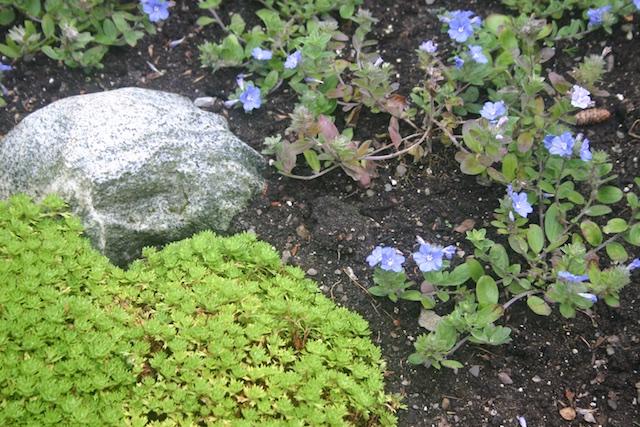 012 - Between a Dandelion and a Daisy: Les Jardins de Métis