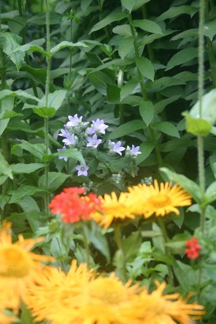 015 - Between a Dandelion and a Daisy: Les Jardins de Métis