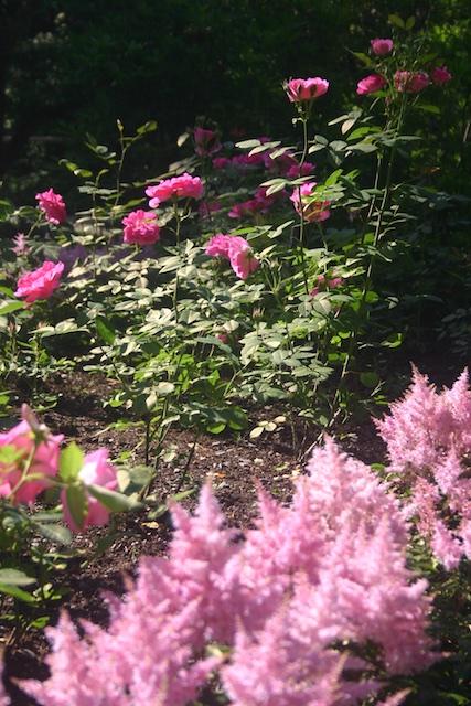 024 - Between a Dandelion and a Daisy: Les Jardins de Métis