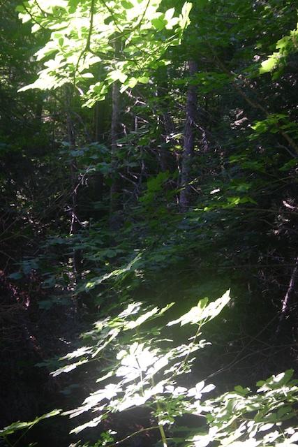 026 - Between a Dandelion and a Daisy: Les Jardins de Métis