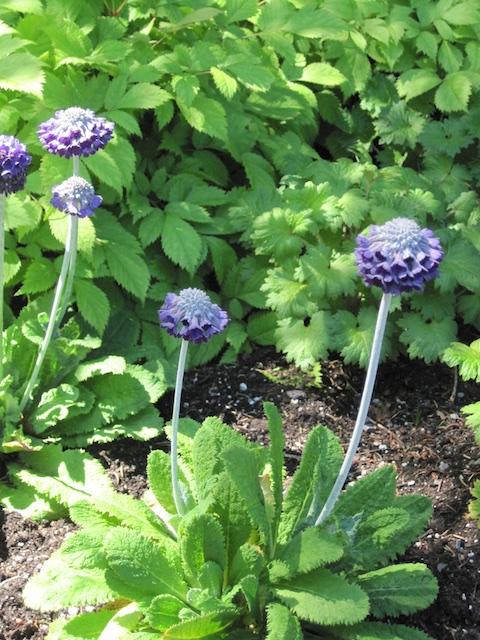032 - Between a Dandelion and a Daisy: Les Jardins de Métis