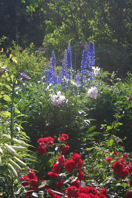 035 1 - Between a Dandelion and a Daisy: Les Jardins de Métis
