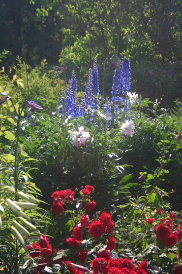 035 - Between a Dandelion and a Daisy: Les Jardins de Métis