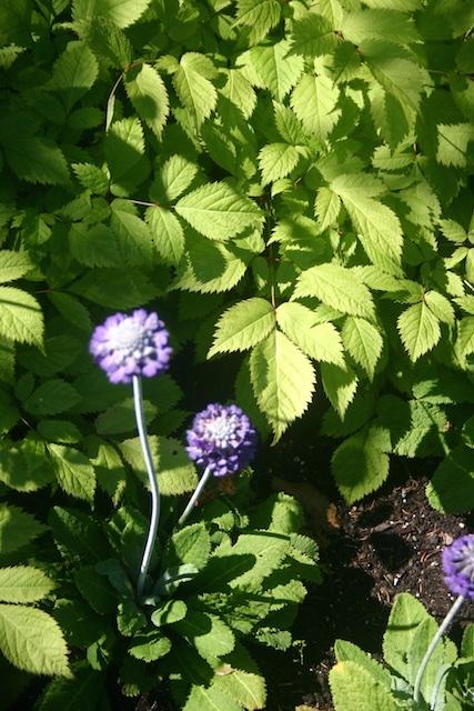 067 - Between a Dandelion and a Daisy: Les Jardins de Métis