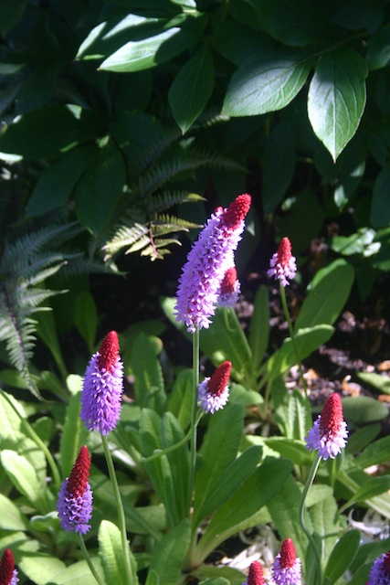 0691 - Between a Dandelion and a Daisy: Les Jardins de Métis