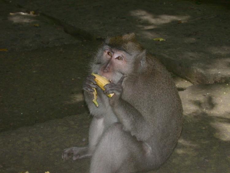 20040326003 - Up the Balinese Mountainside to Ubud