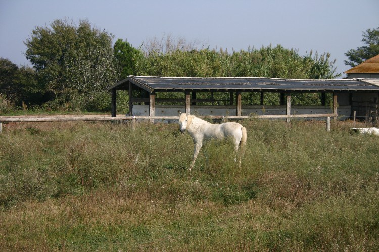 gat8 - Arles: The Gateway to the Camargue