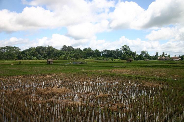 ub5 - Up the Balinese Mountainside to Ubud
