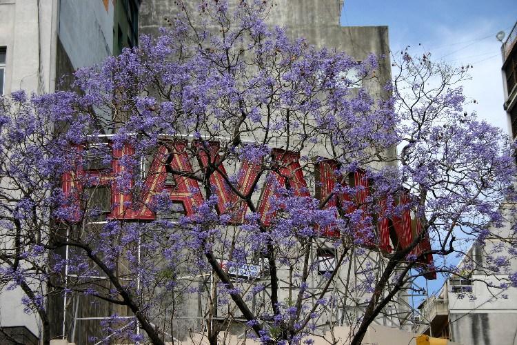 unplan2 - An UnPlanned Plan in Buenos Aires, Argentina