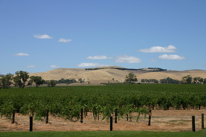 ba1 - The Barossa Valley: A Study in Brown, Blue and Green