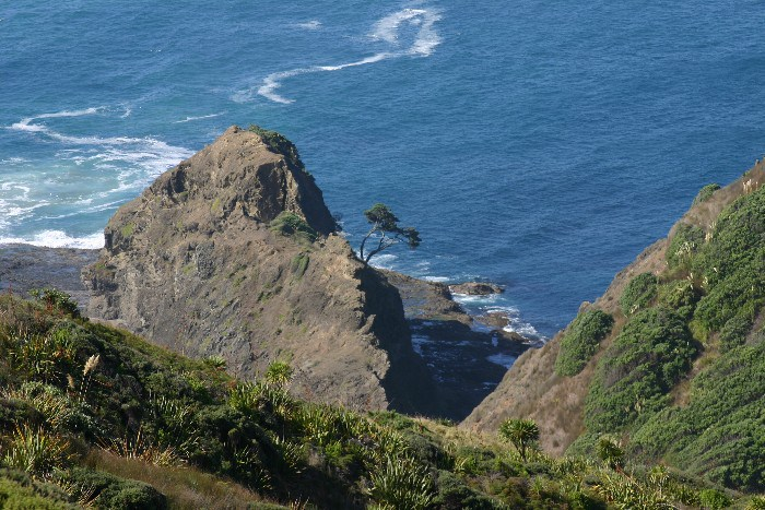 cape17 - Cape Reinga: The Very North of the North Island in New Zealand