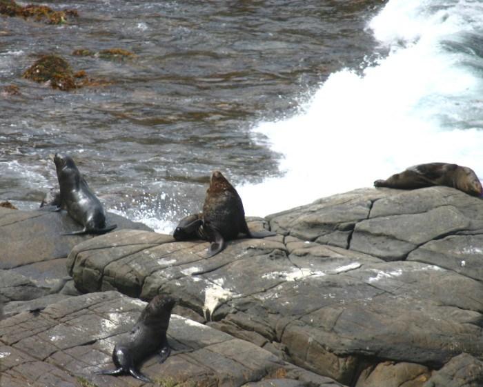 roo12 - Searching for 'Roos on Kangaroo Island, Australia