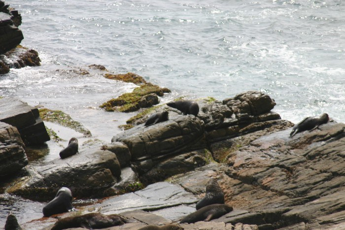 roo13 - Searching for 'Roos on Kangaroo Island, Australia