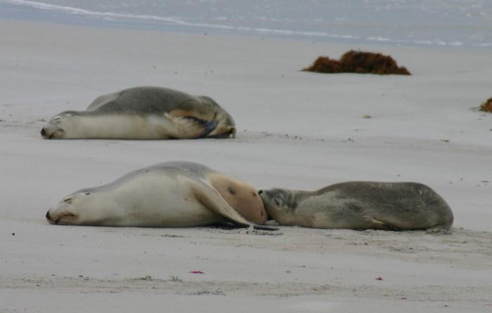 roo2 - Searching for 'Roos on Kangaroo Island, Australia