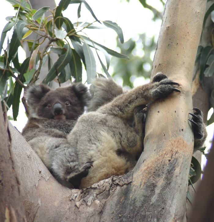 roo5 - Searching for 'Roos on Kangaroo Island, Australia