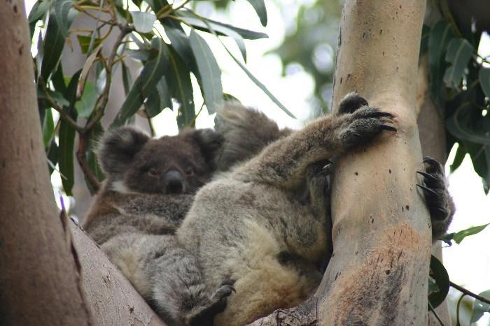 roo6 - Searching for 'Roos on Kangaroo Island, Australia