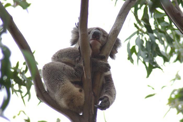 roo7 - Searching for 'Roos on Kangaroo Island, Australia