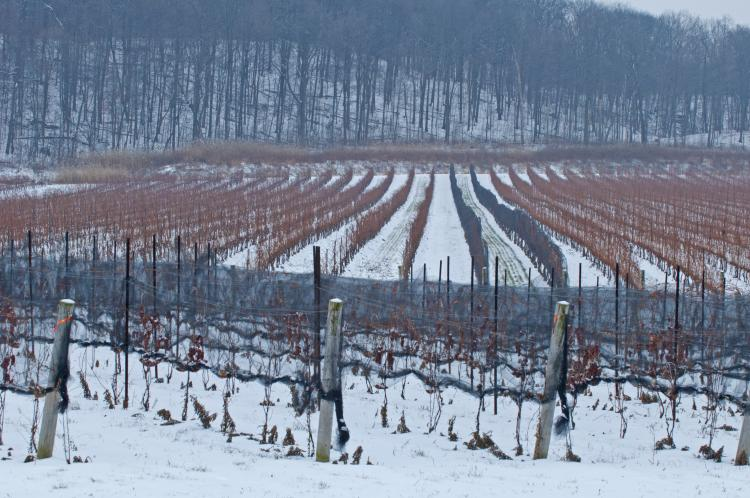 winter vineyard Ont Winter Expedia - Winter in Ontario: Get Out and Play!