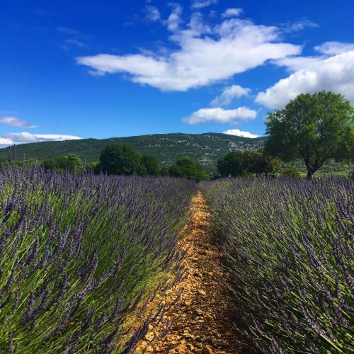 13668995 10154099730960020 2723111742563283395 n 500x500 - Wander the Ardèche With Us!