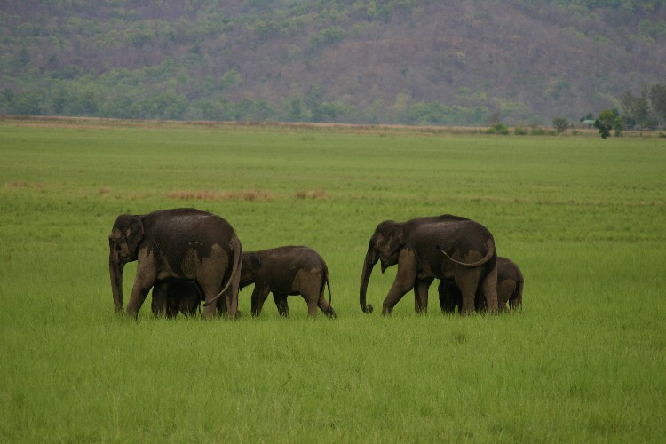 Cool and Wet Safari Adventures in Corbett National Park