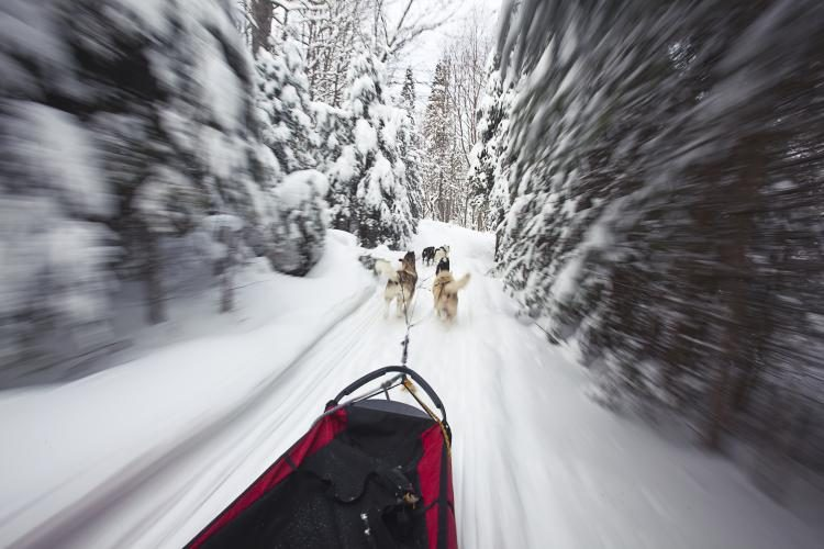 dog sled action Ont Winter Expedia 750x500 - 6 Fall Wilderness Destinations