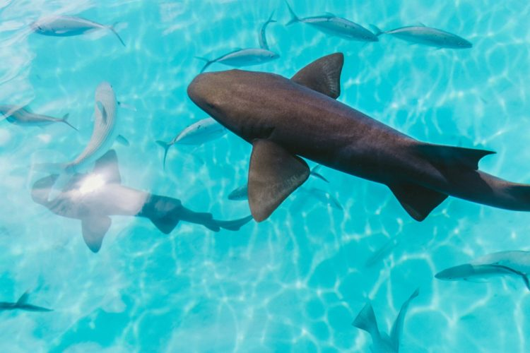 Image 2 Tahiti Sharks and fish 750x500 - Why Tahiti Is My Favourite Island in the South Pacific