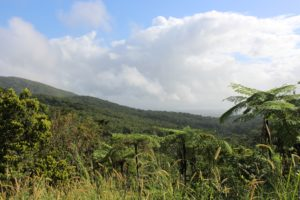 untitled 1 1 300x200 - Discover the Many Charms of Guadeloupe