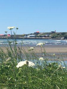 IMG 1895 e1532283640594 225x300 - 28 Pictures to Make You Return to Nova Scotia