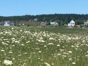 IMG 1896 300x225 - 28 Pictures to Make You Return to Nova Scotia