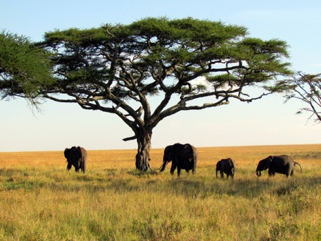 safari1 - Safari: What You Need to Prepare Before You Go