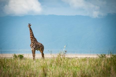 safari2 - Safari: What You Need to Prepare Before You Go