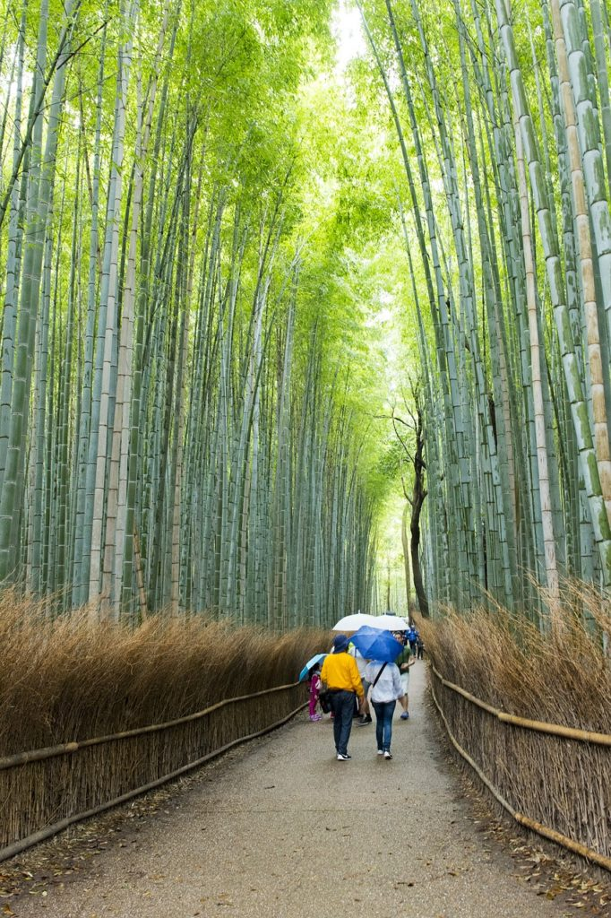 Image 3 Sagano Bamboo Forest Japan 682x1024 - The 9 Best Travel Experiences Around the World