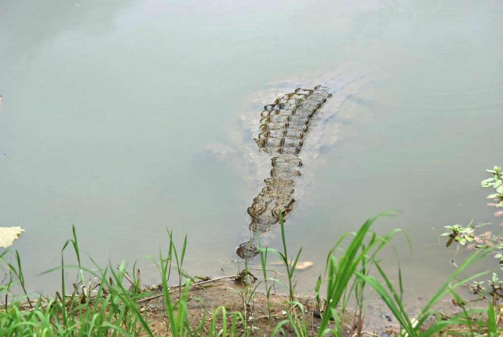 Image 9 South Africa crocodile diving 1 1024x685 - The 9 Best Travel Experiences Around the World