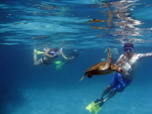 best diving in australia